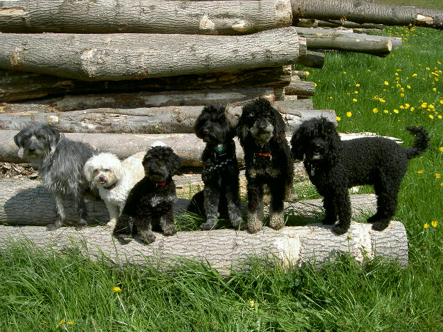 Erziehungskurse kleine Hunde