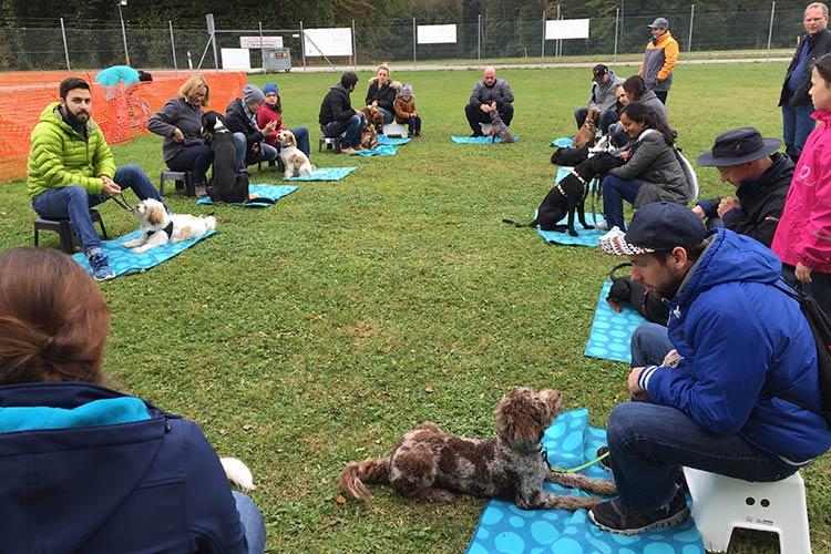Hundetraining / Hundeausbildung